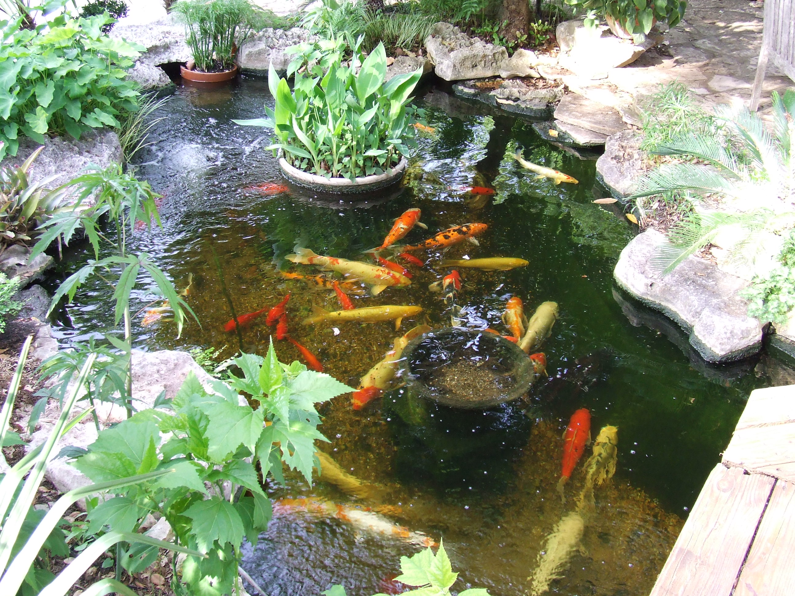 Koi filters koi pond systems with self cleaning filters for Self cleaning pond filter