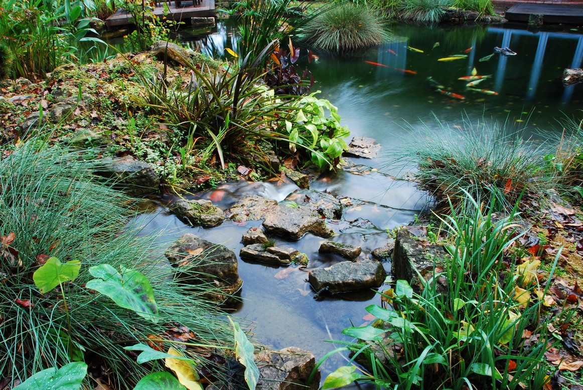 Bbf xf20000 on koi pond waterfall for Koi pond builder
