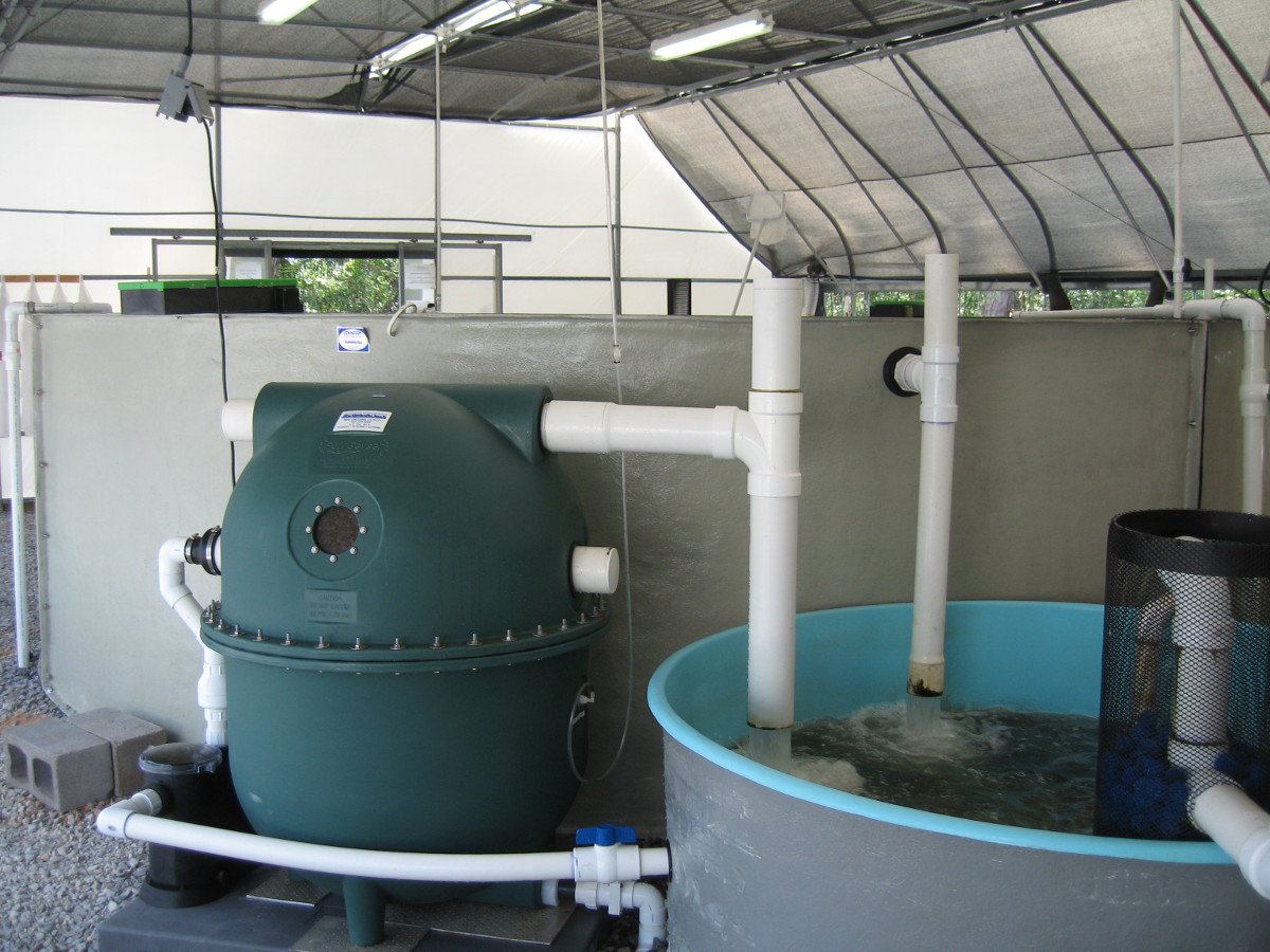 Ast filters recirculating aquaculture systems for Fish tank filtration systems